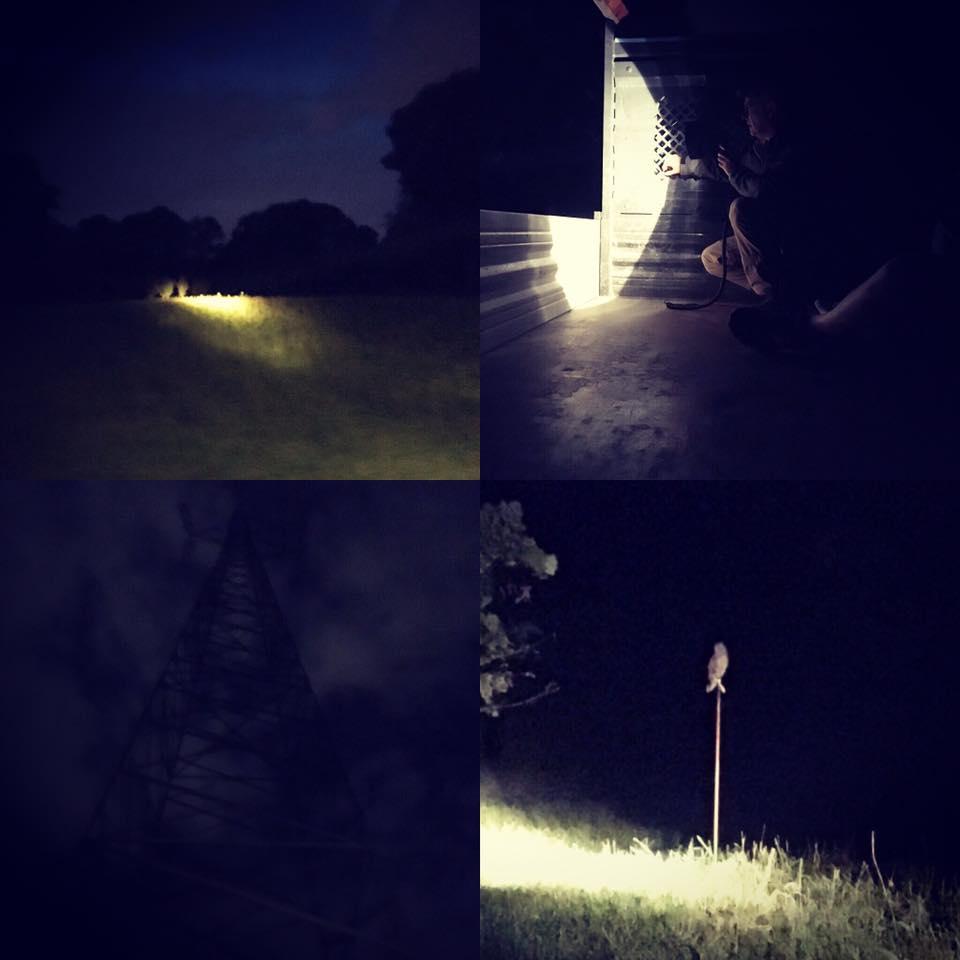 animali-notturni-milano
